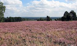 Lüneburger Heide Landschaft